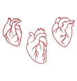 Human hearts icons in outline style vector image vector image