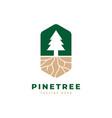 pine tree logo design template vector image vector image