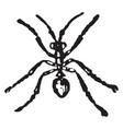 worker ash black ant vintage vector image