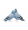cute couple pigeons female and male birds vector image