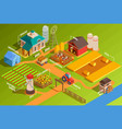 isometric farm infographics vector image vector image