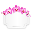 Pink Orchid Flowers with Celebration Frame vector image