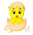 little cartoon chick hatched from an egg