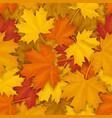 fallen maple leaves pattern vector image
