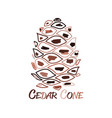 cedar cone sketch for your design vector image vector image