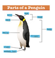 Diagram showing parts of penguin vector image vector image