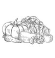 sketch fresh farm vegetables vector image