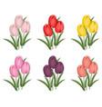 vintage tulips flowers set background vector image