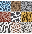 leopard zebra cow tiger giraffe skin pattern