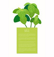 basil bunch on vertical banner with sample text vector image vector image