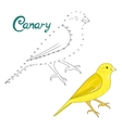 Educational game connect dots to draw canary bird vector image vector image