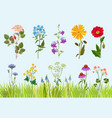 flowers collection botanical wild plants field vector image vector image