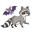 Raccoon and bat on a white background