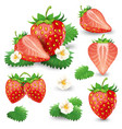 ripe strawberry with leaves and blossom set vector image vector image