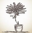 Sketch of small tree vector image vector image