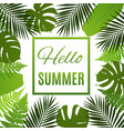 tropical background with palms and ferns vector image