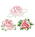 red rose flower vector image vector image