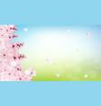 blossoming light pink sakura flowers vector image vector image