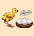 chicken and feather nest with eggs farm product vector image vector image