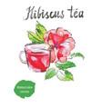 hibiscus tea watercolor vector image vector image
