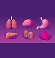 set human internal organs anatomical stomach liver vector image