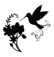 black silhouette humming and flower composition vector image vector image