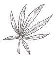 cannabis sketch medical marijuana herbal plant vector image