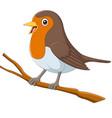 cartoon robin bird sitting on a tree branch vector image vector image