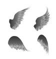 four black wings vector image vector image