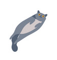 playful gray smiling cartoon british cat lying vector image vector image