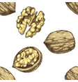 seamless pattern with hand drawn walnut nuts vector image vector image