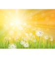 spring background yellow vector image vector image