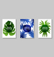 tropical paradise leaf cover layout vector image