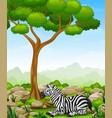 cartoon zebra lay down in the jungle vector image vector image