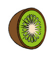 kiwi fruit icon vector image vector image