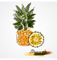 Pineapple fruit slice vector image