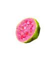 polygonal guava vector image vector image