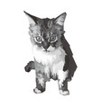 cute gray cat vector image vector image