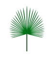 Green palm leaf on isolated white background vector image