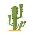 Isolated cactus plant design vector image vector image