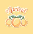 Retro apricot vector image vector image