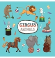 set colorful circus animals vector image