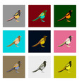 set of in flat style magpie vector image