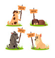 set of sitting homeless dogs with a poster adopt vector image vector image