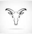 goats mountain head on white background wild vector image vector image