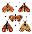 set isolated magic moths and butterflies vector image vector image
