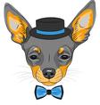dog Chihuahua breed vector image