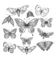 butterfly mariposa sketch vector image vector image