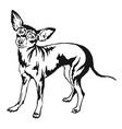 decorative standing portrait of dog prague ratter vector image vector image