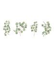 eucalyptus watercolor floral set green vector image
